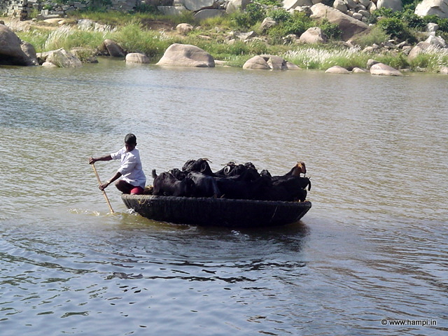coracle at Tungabhadra River, Hampi
