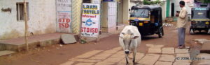 Hotels and Lodges in Hampi