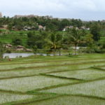 Virupapur Gadde