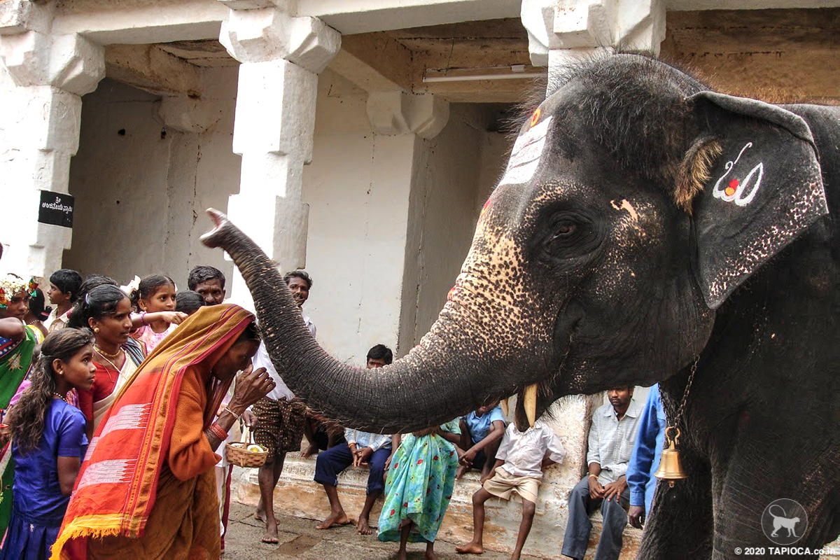 ..and that smooch by Lakshni, the temple elephant at Virupaksha Temple cost you a rupee!
