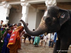 Lakshmi the temple elephant of Virupaksha Temple