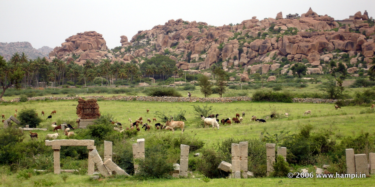 Cowherds and Cattle in Hampi Ruins Site